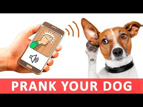 Knock On Door Sounds To Prank Your Dog | Audio Toys For Dogs HD
