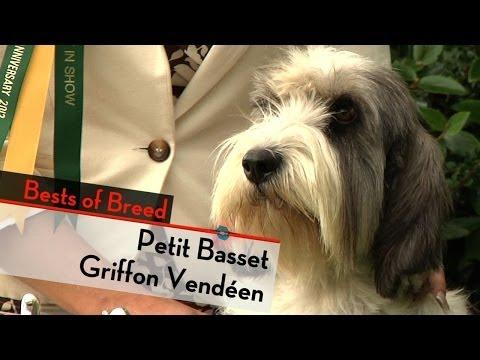 Petit Basset Griffon Vendeen - Bests Of Breed