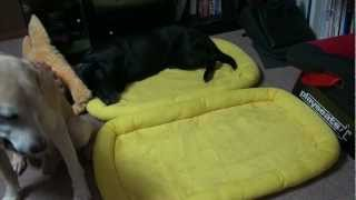 仲良すぎ…飼い主不在時のペットたちの寝姿が想像以上だった