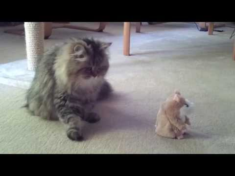 Кошка и говорящий хомяк прикол!