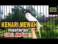Kenari Mewah Durasi Lama Cocok Untuk Masteran Burung Kicau  Ampuh  Mp3 - Mp4 Download