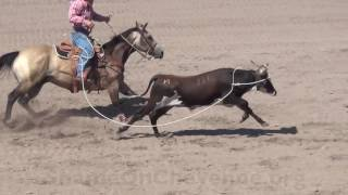 Animal Injuries at the Cruel 2016 CFD Rodeo