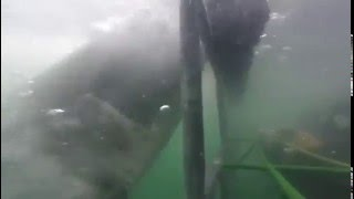 Dale Steyn has a close encounter with a great white shark