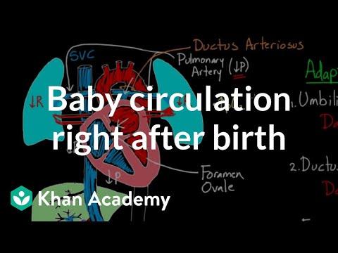 Baby circulation right after birth   Circulatory system physiology   NCLEX-RN   Khan Academy