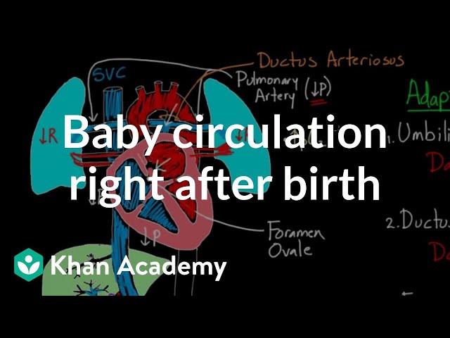Baby circulation right after birth | Circulatory system physiology | NCLEX-RN | Khan Academy