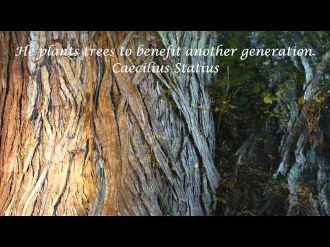 Trees by
