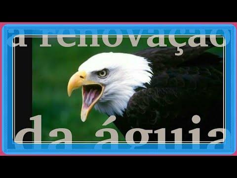 Mensagem De Motivação á Renovação Da águia