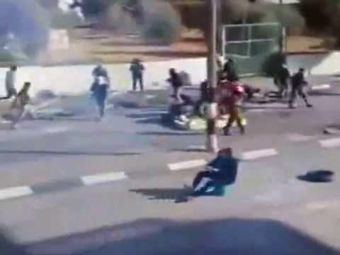 palestine thug life
