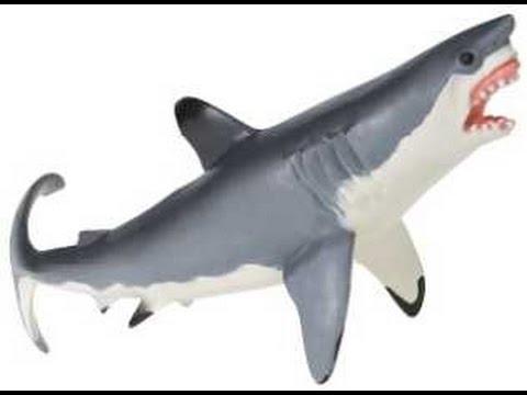 Amazonfr : dguisement requin garon : Jeux et Jouets