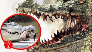Die 10 gefährlichsten Tięre der Welt!