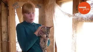 Лишай у кошек