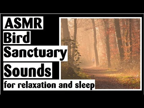 ASMR Bird Sanctuary Forest Sounds - Nature, Crunchy Leaves, Train, Plane - No Talking (after intro)