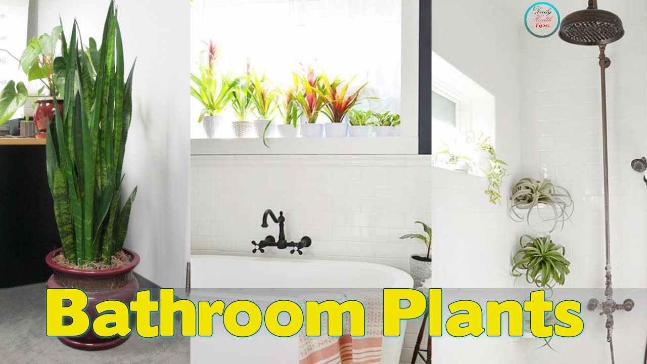 11 Plants That Will Grow Better In Your Bathroom - YouTube