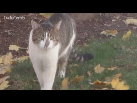 Boo Day 131 - Stella's Parent? Zebedee's Catnip Mice - Training and Socializing A Feral Cat