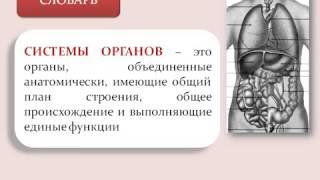 Системы органов. Нервная и гуморальная регуляция.AVI