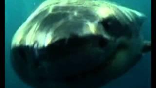 Как Жир печени акулы  стал источником ПНЖК  Сквалена