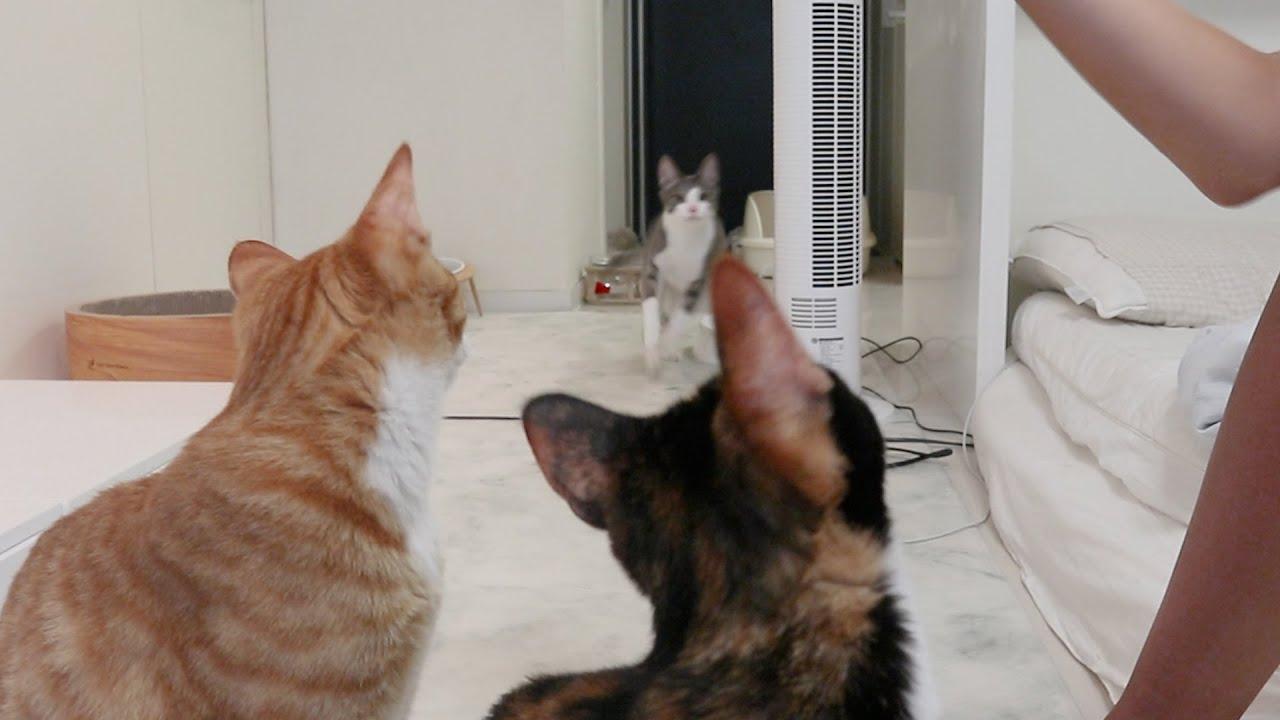 간식만 보면 난리나는 도른자 고양이