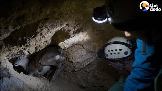 Baby Deer Stuck in Cave Saved by Rescuers | The Dodo