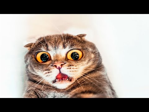 Best of Funny Scared Cats Compilation (2019) 😹 Try Not To Laugh 😂