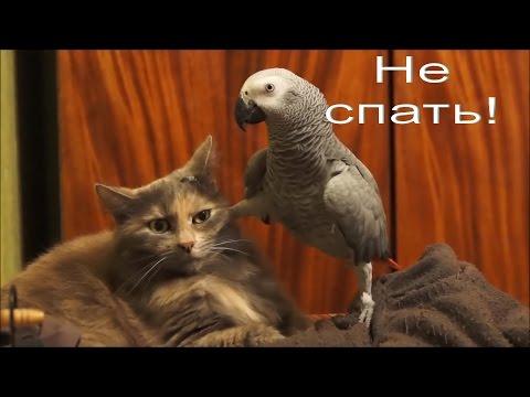 Видео приколы про попугаев