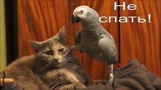 Попугаи и кошки! Здоровый смех Вам обеспечен! Видео прикол!