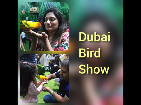 Dubai Exotic Bird Show||Dubai Creek Park Bird Show||malayalam vlog
