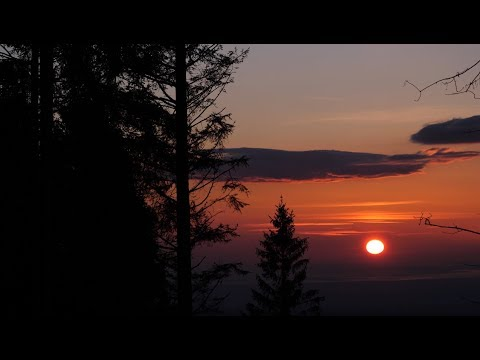 Sunset and Wind Blowing Through Spruce Forest / 1 Hour Wind Sound