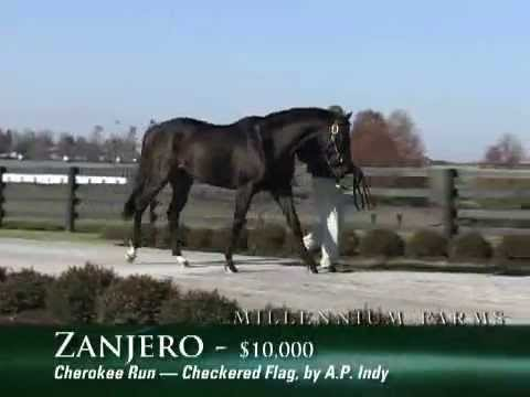 ZANJERO   ( Cherokee Run-Checkered Flag by AP Indy )