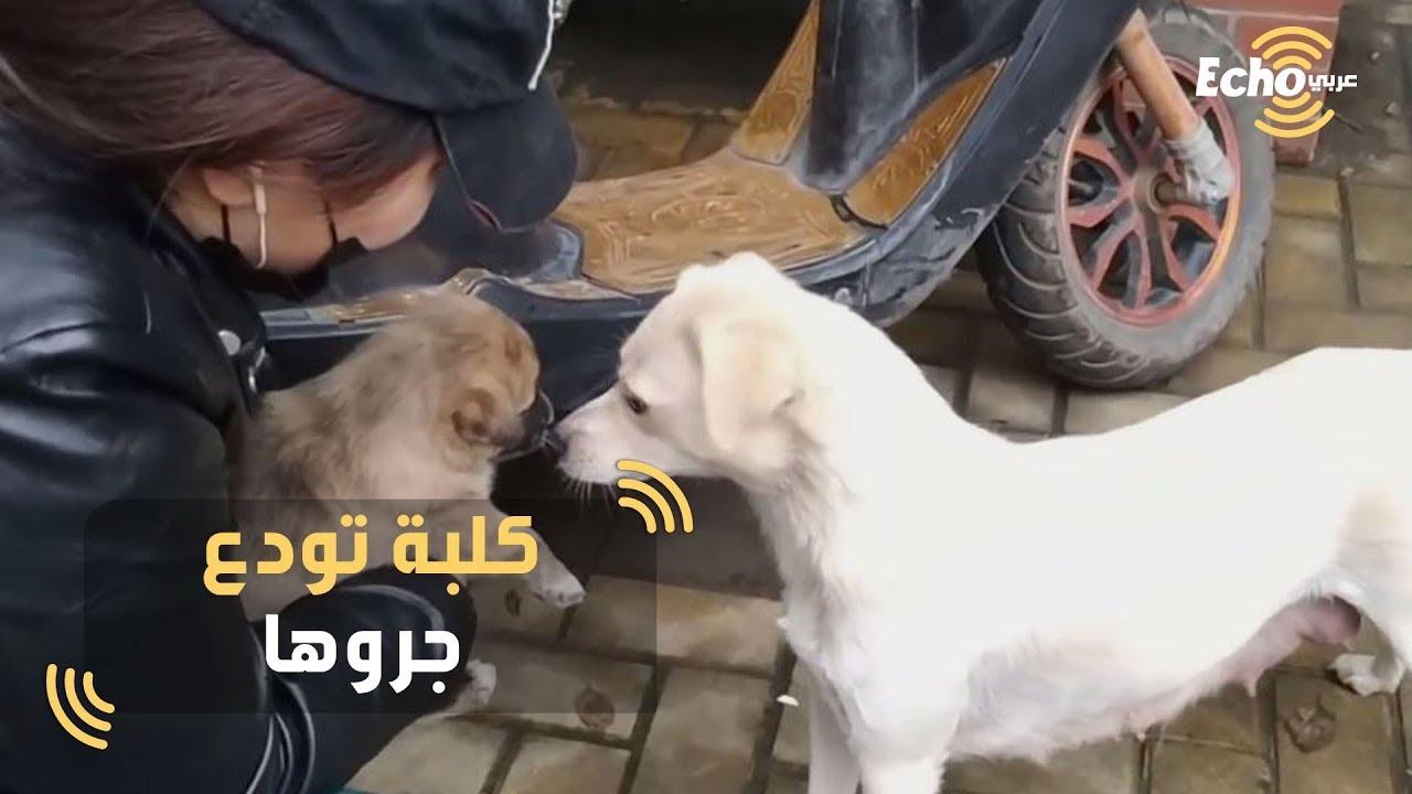مشهد مؤثر لكلبة تودع جروها بعد مغادرته