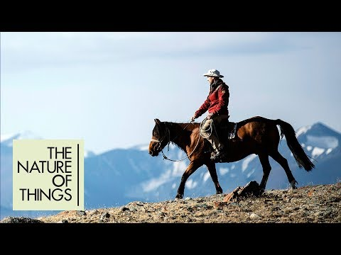 Equus: Story of the Horse  New Series Coming to CBC Docs