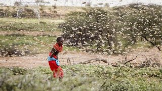 Uganda on alert as Kenya struggles to stop locust swarms