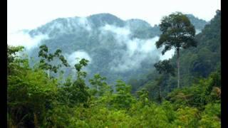 Chari Chari - Flow Dub Outta Borneo