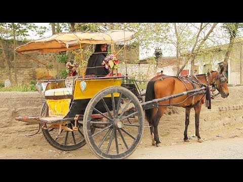VILLAGE LIFE IN PAKISTAN  (Yar Hussain, Sard Cheena) SWABI