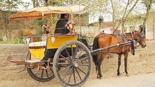 VILLAGE LIFE IN PAKISTAN  (Yar Hussain, Sard Cheena) SWABI