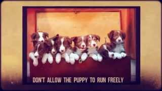 Puppy Potty Training Tips | Puppy House Training Tips | Labrador Puppy Training Tips Crate | Toilet