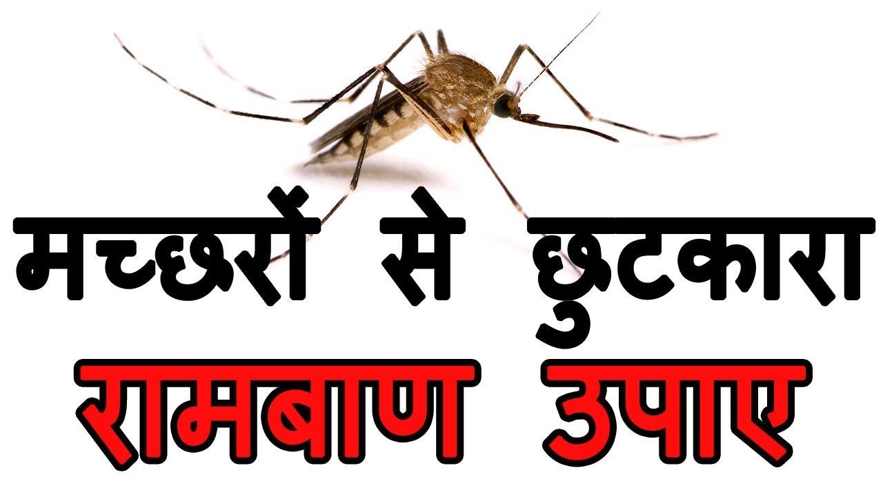 मच्छरों को दूर भगाने का बहुत बढ़िया उपाय