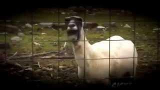 Top 10 Goat Remixes