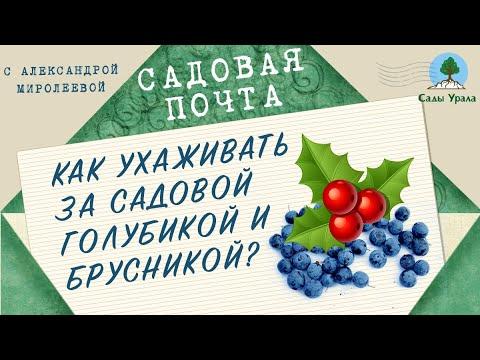 Купить саженцы Сливы Красномясая в интернет-магазине в