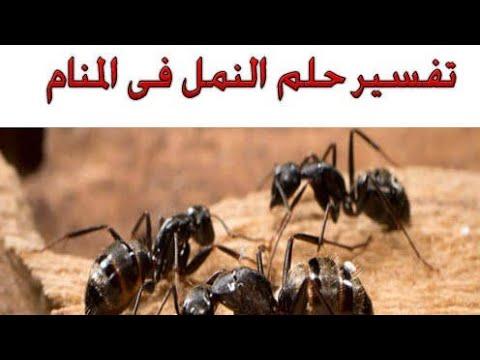 تفسير رؤية النمل للعزباء والمتزوجة والمطلقة والارملة والرجل Youtube