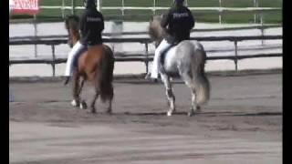 Lamotte-Beuvron 2008 - présentation chevaux islandais