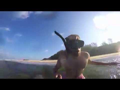 Gugulesizwe Accommodation - Travel Video