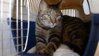 Россиянам запретили держать дома больше двух кошек