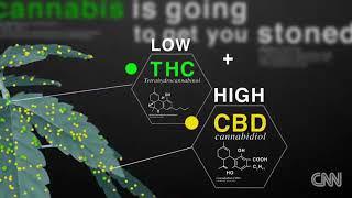 Marijuana Effects on the Brain