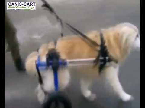Chariot Walkin Wheels pour animaux handicapés de chez