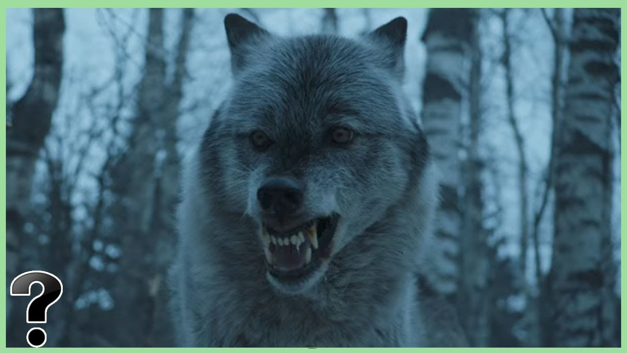 The mysterious extinction of the dire wolf