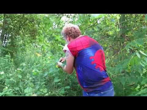 Wild Edibles - Jewelweed (Spotted Touch-me-Not)