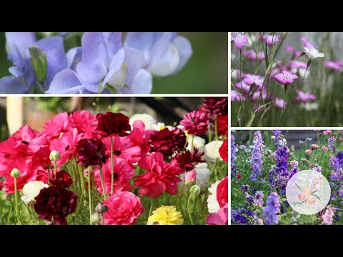 Spring Cut Flower Garden Planning Hardy Annuals And Planting Fall