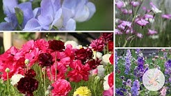 Growing Flowers from Seed Spring Cut Flower Garden Planning: Hardy Annuals and Planting Fall Bulbs