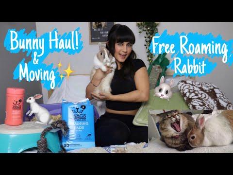 Bunny Supplies Haul |Moving Haul  🐾