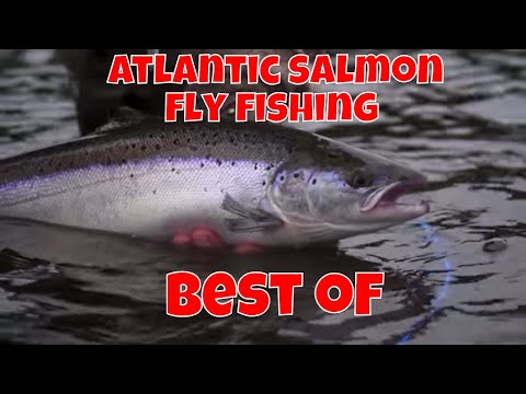 Atlantic Salmon Fly Fishing - Best Of